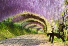 仙境不过如此:穿越世界上最美的树隧道